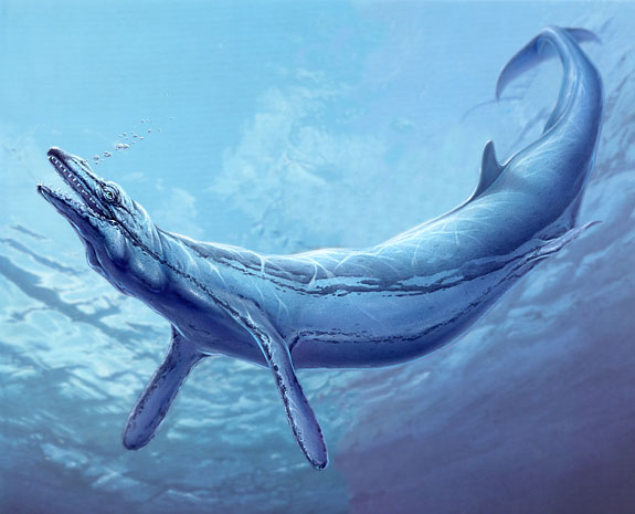 Dwenty: The Project / Basilosaurus